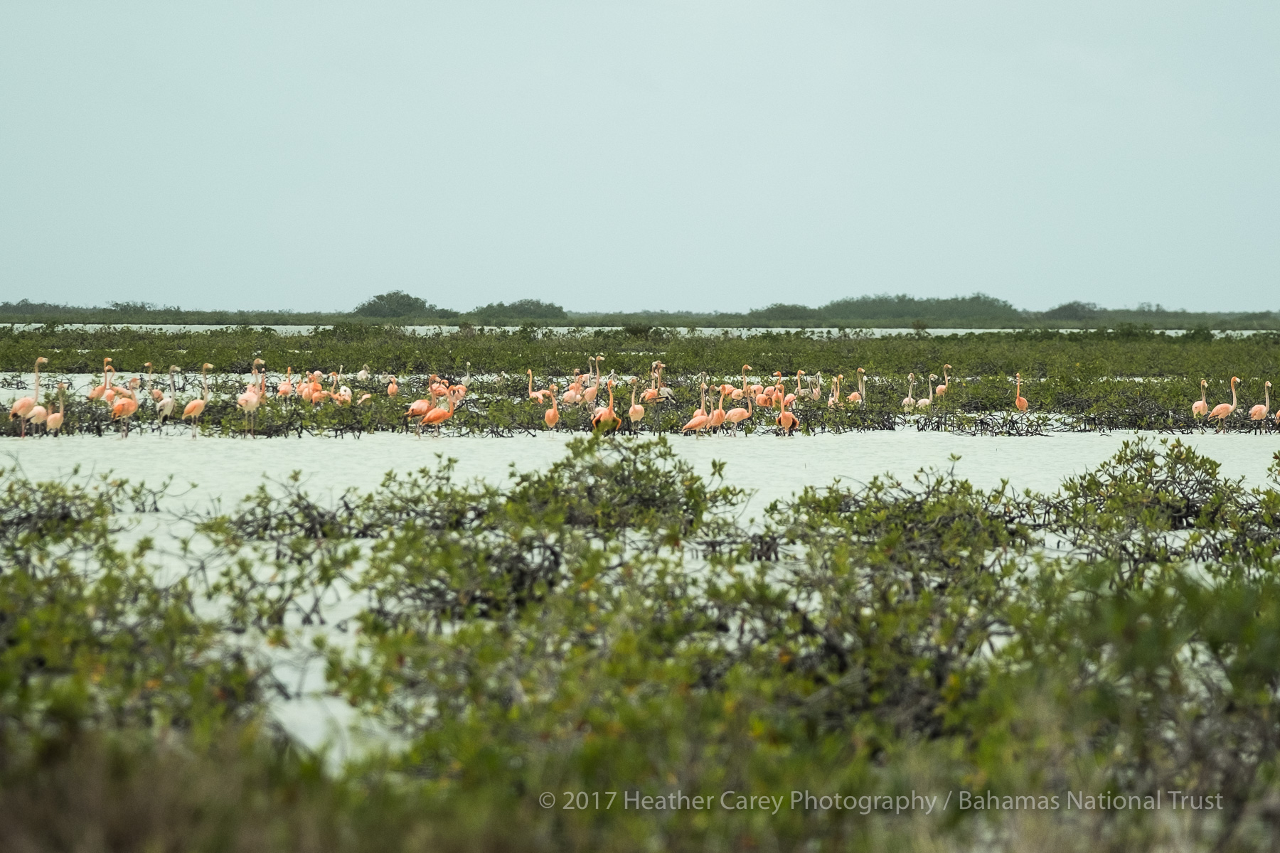 flamingos west side national park andros
