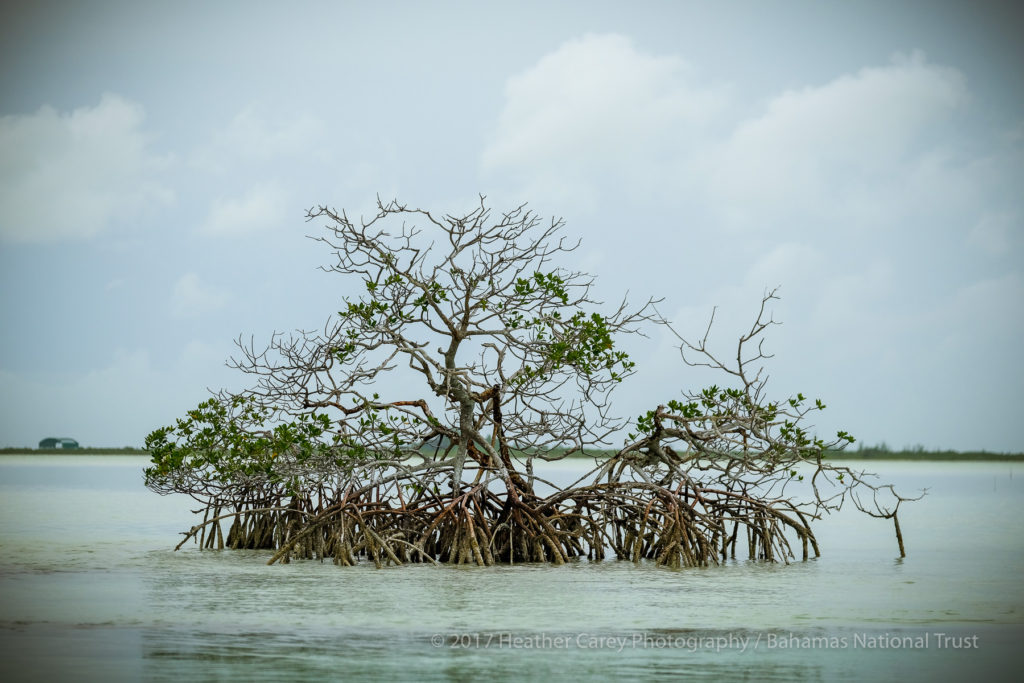 mangroves west side national park andros