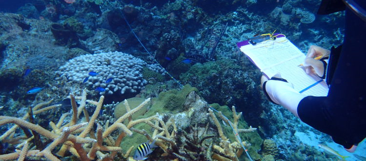 agraa coral survey coral restoration