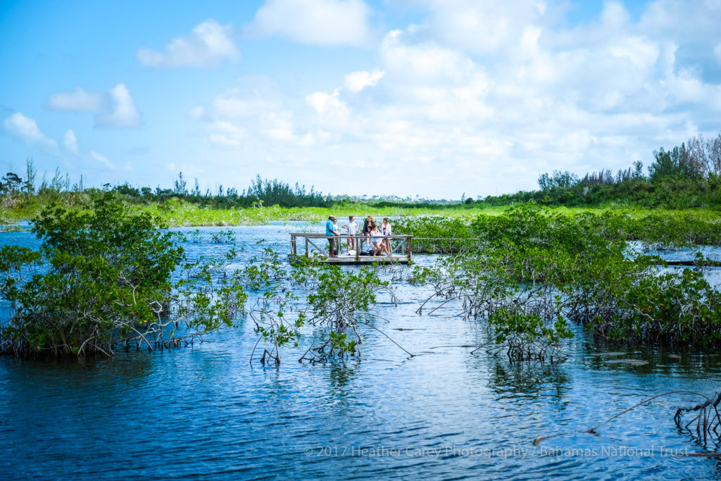 mangrove creek lucayan national park grand bahama