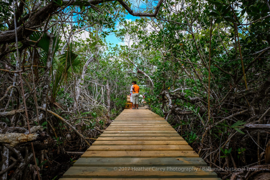 boardwalk through mangroves lucayan national park grand bahama