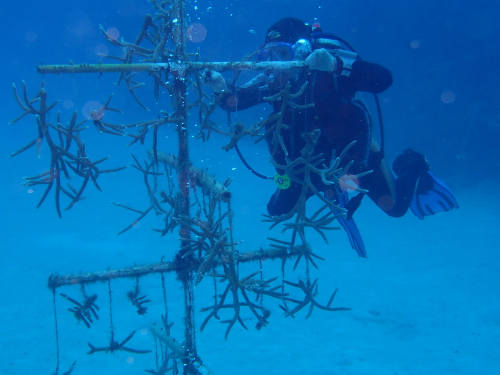 Coral Reef Nursery Cleaning