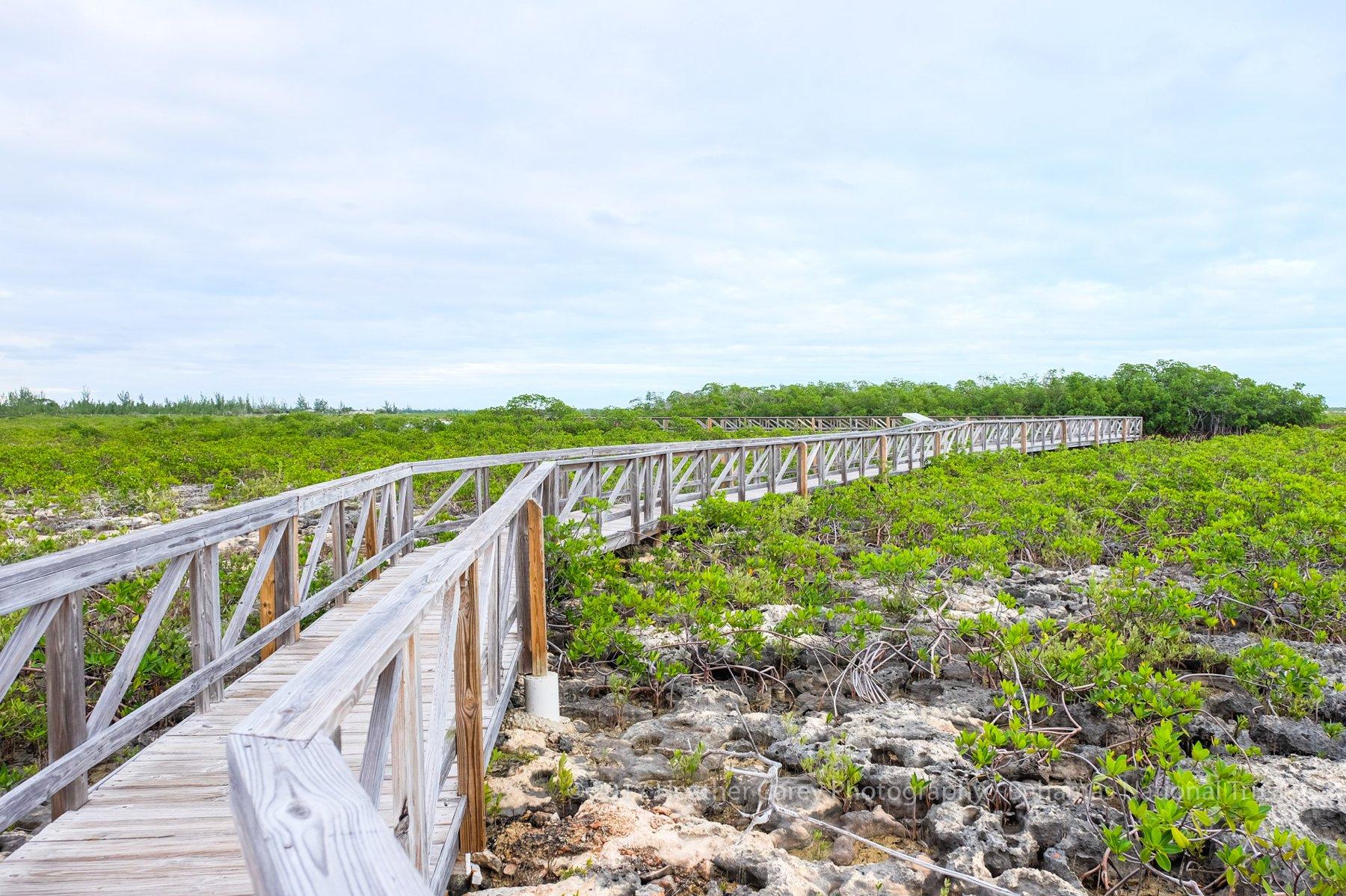 rotary bahamas and bahamas national trust mangrove planting bonefish pond national park barry rassin