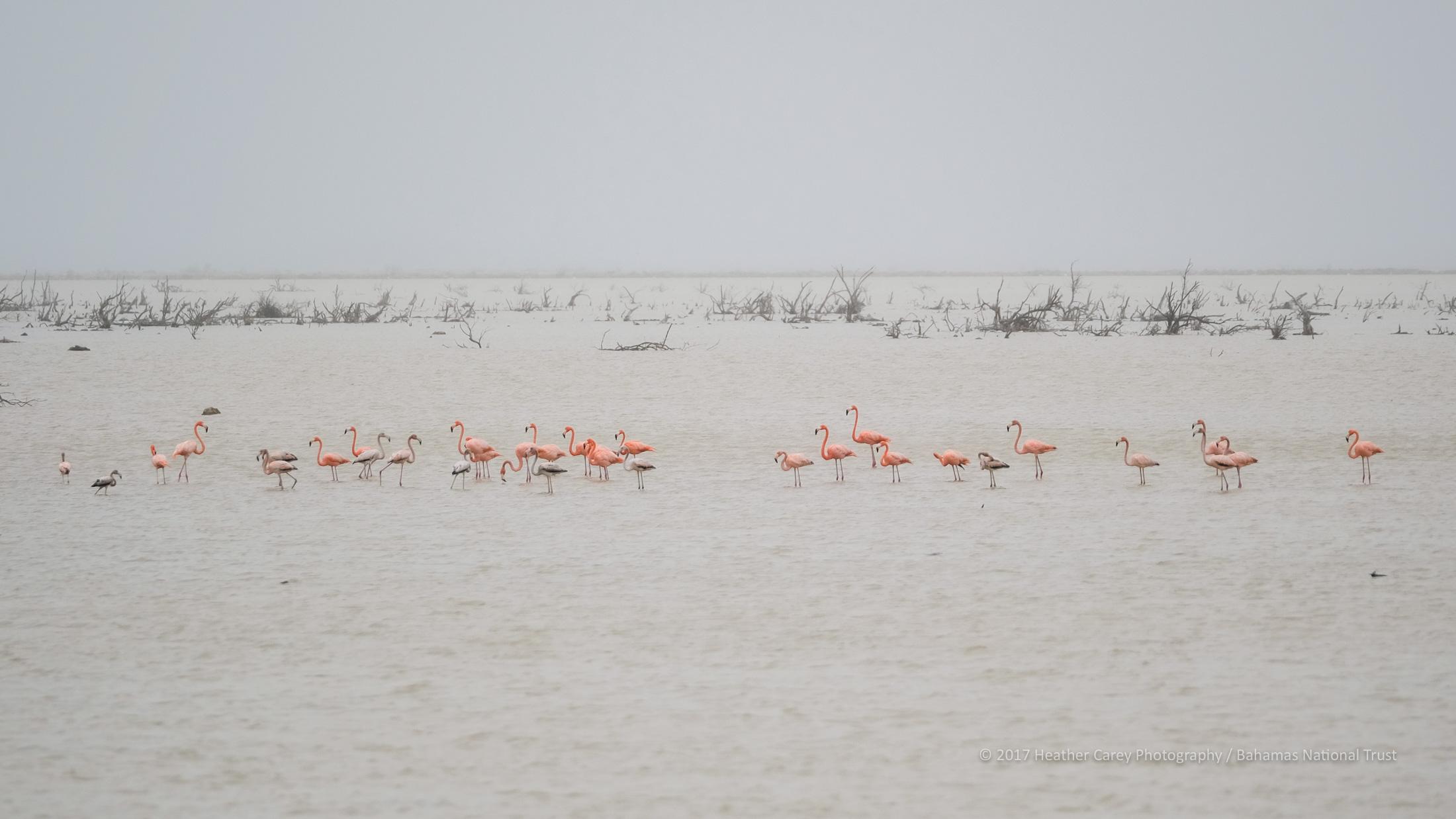 Inagua national park bahamas flamingos