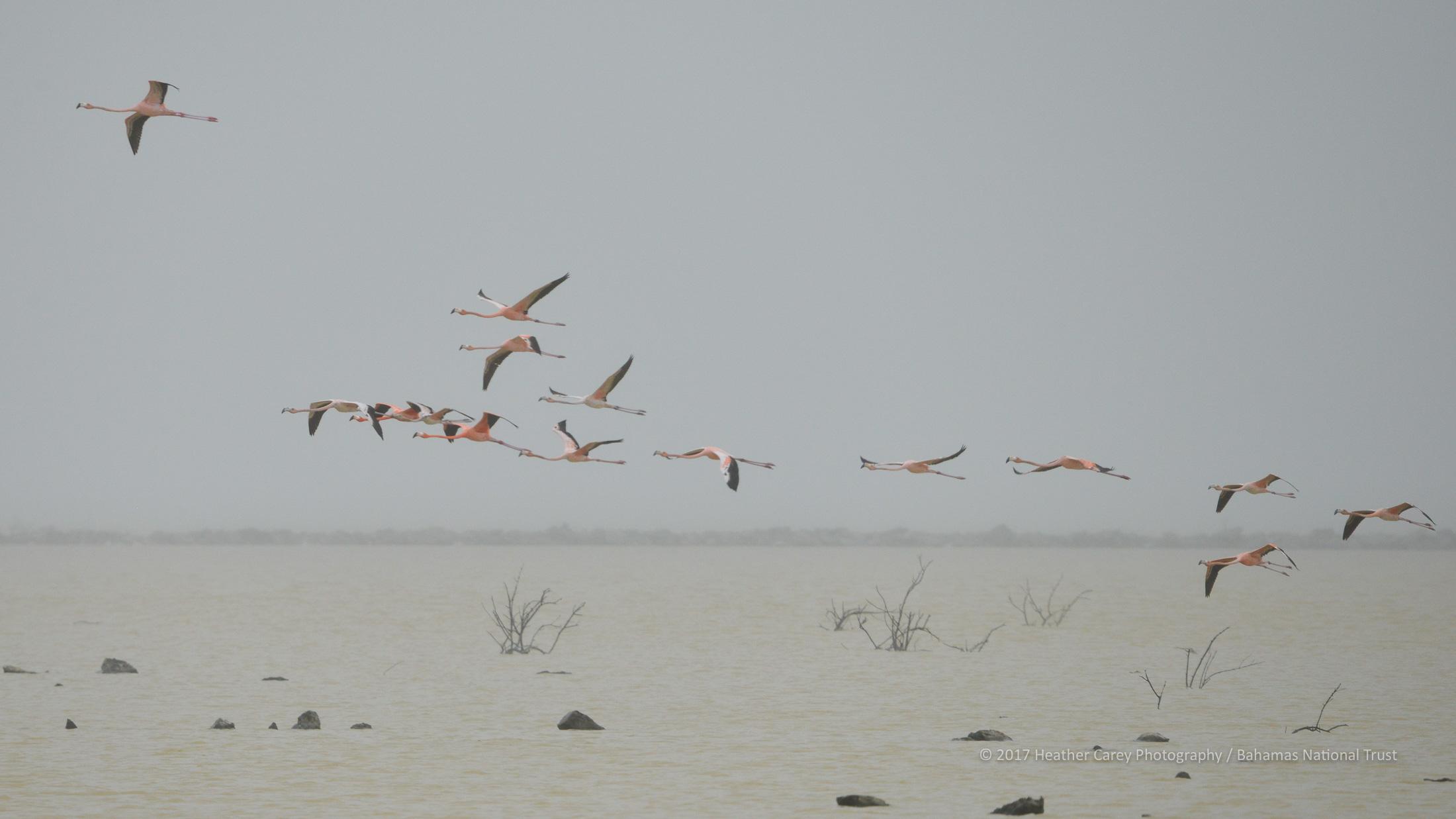 flamingo inagua national park