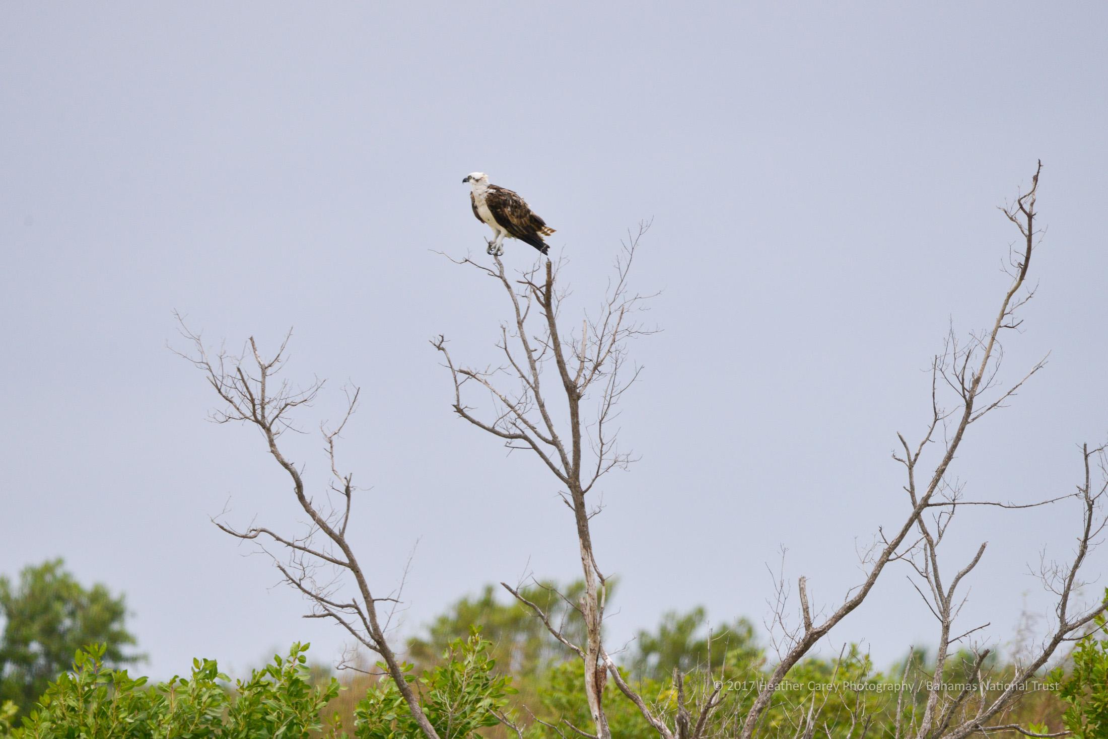 Inagua national park